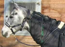 mdms_2010_horse_2