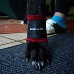Fleece Toffler Hausschuhe für Hunde – SABRO › Arkanum Vitae