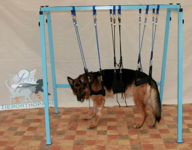 pfaff therapie schlingenwagen f r hunde arkanum vitae. Black Bedroom Furniture Sets. Home Design Ideas