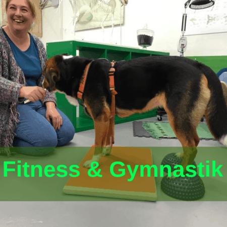 Sport - Fitness - Gymnastik