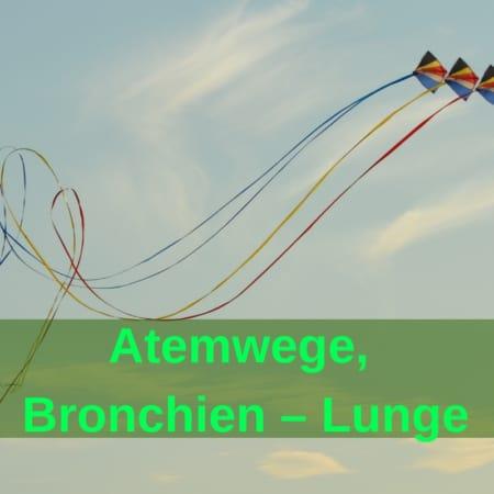 Atemwege, Bronchien - Lunge - Pferd