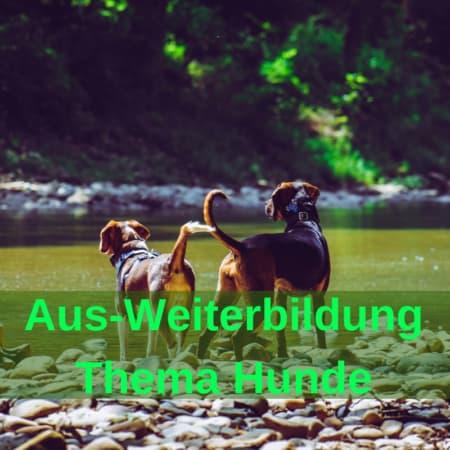Seminare für Hund und Besitzer