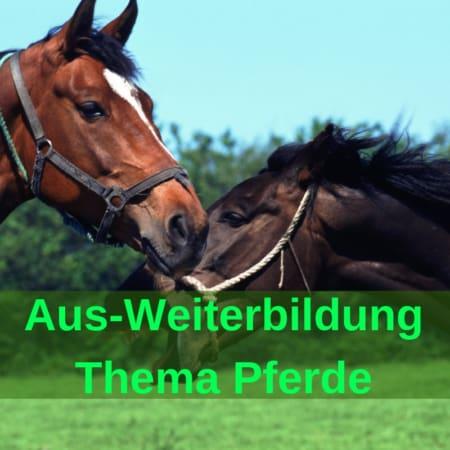 Seminare für Pferd und Reiter