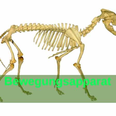 Bewegungsapparat, Knochen - Muskeln - Gelenke - Bänder - Sehnen - pferd