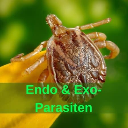 Parasiten, Würmer - Zecken - Milben - Flöhe - Fliegen - Bremsen - Nager