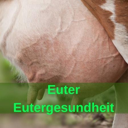 Euter - Eutergesundheit