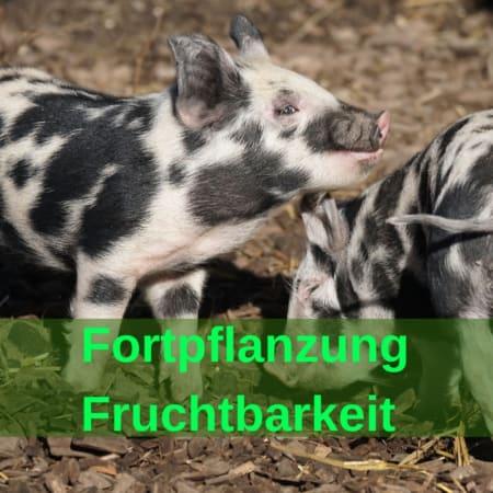 Fortpflanzung, Fruchtbarkeit, Trächtigkeit, Geburt, Laktation - Pferd