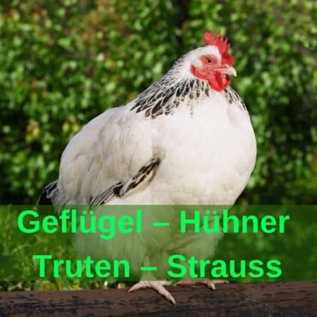 Geflügel - Hühner - Truten - Strauss