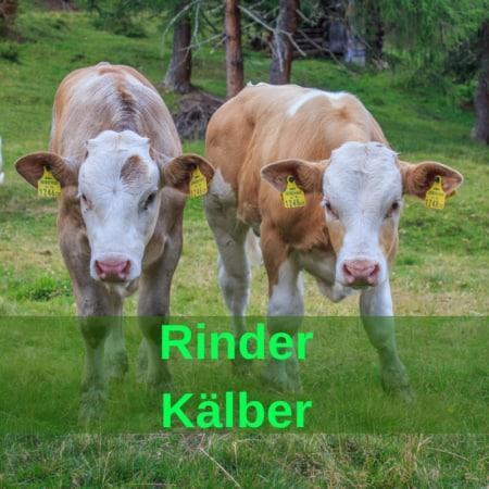 Rinder - Kälber - Kühe - Milchkühe - Mastkühe