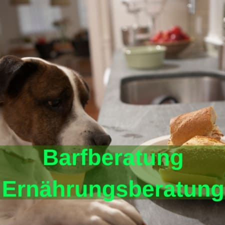 BARF Beratung - Ernährungsplan