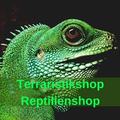 Terraristik - Reptilien