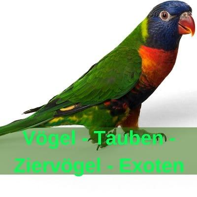 Vögel, Tauben - Ziervögel - Exoten