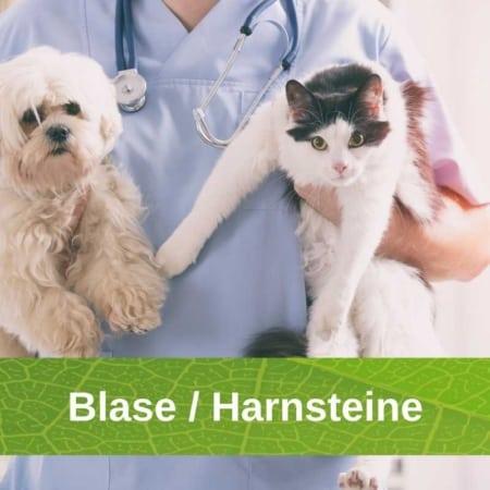 Blase - Harnsteine