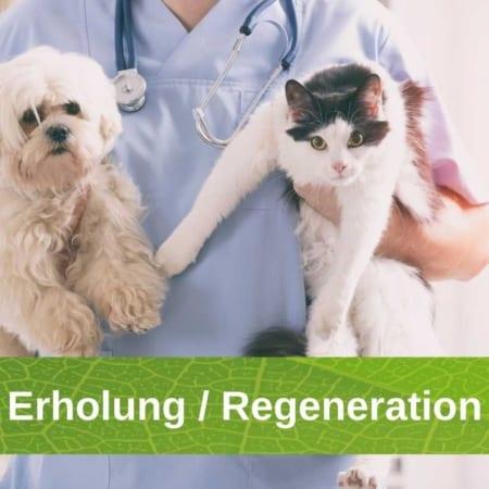 Erholung - Regeneration - Rekonvaleszenz