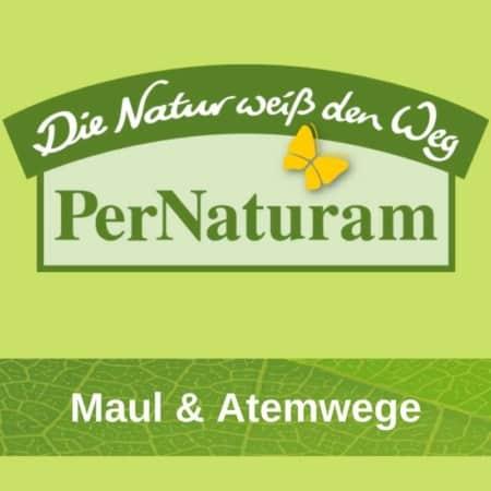 Maul & Atemwege Hund Pernaturam