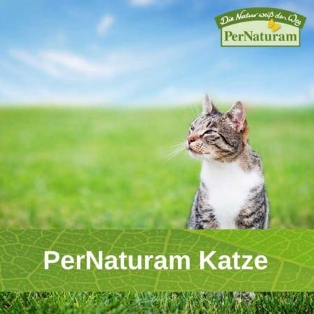 PerNaturam Katze