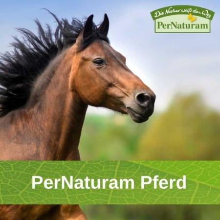 PerNaturam Pferd